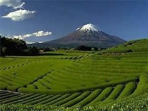 japanese-aguriculture